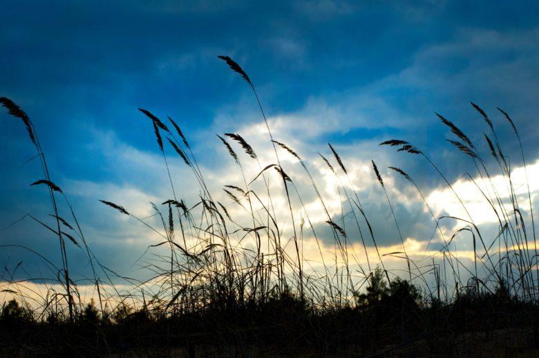 wind-1