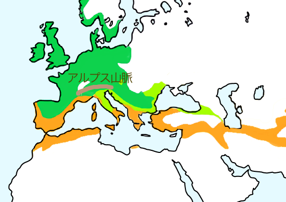 Cfa-europa
