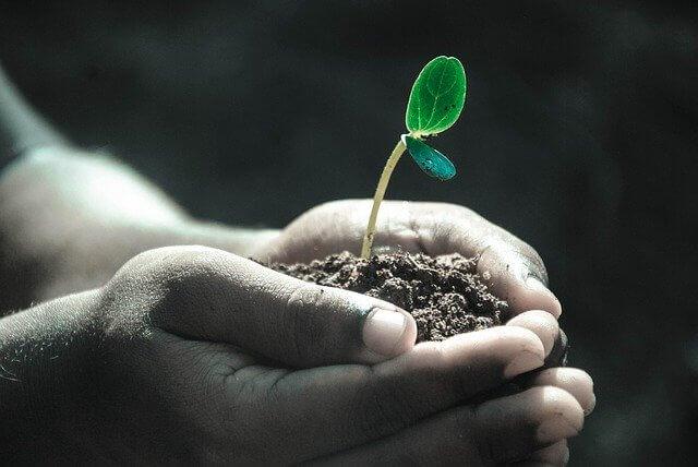hands-soil-cfa