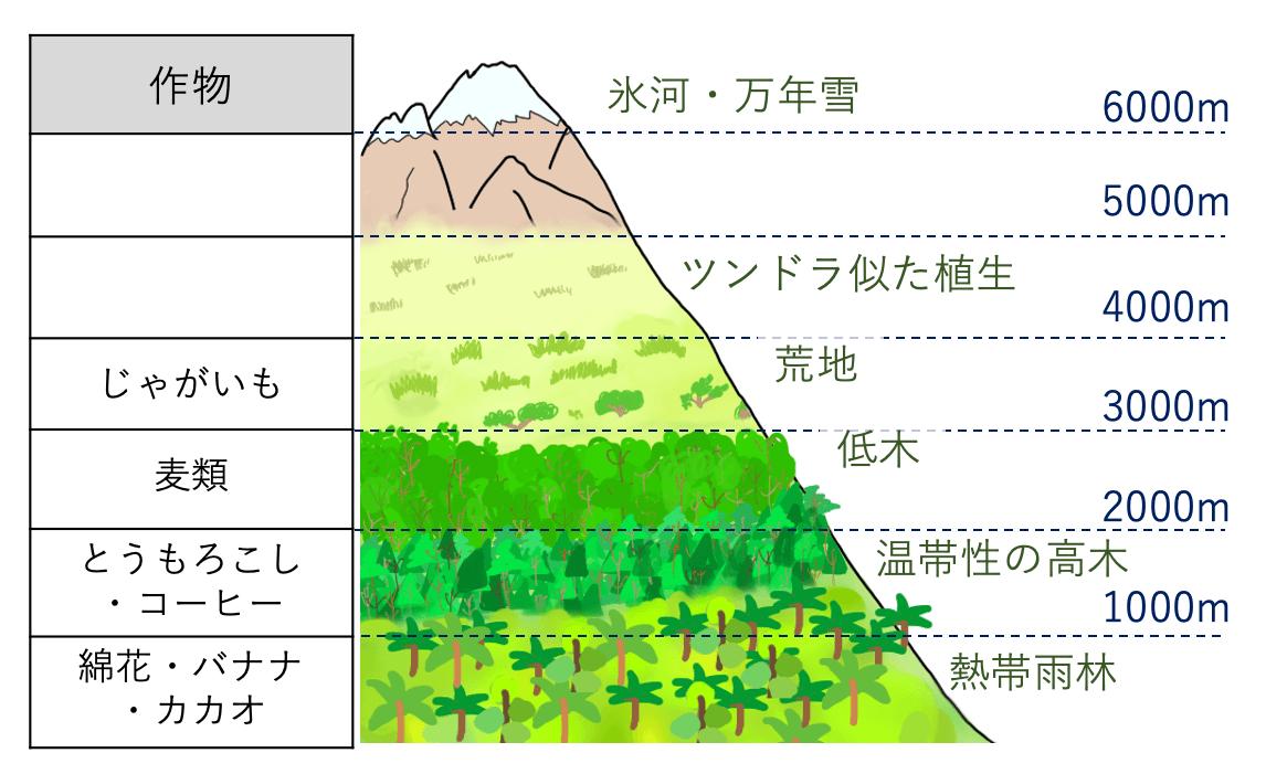 andes-vegetation