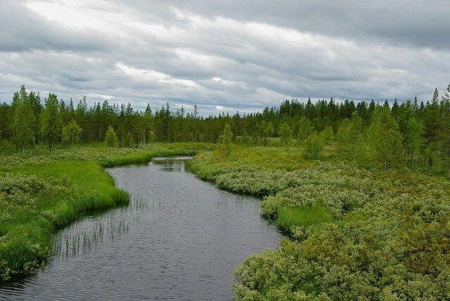 finland-taiga