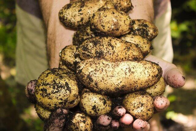 potatoes-high